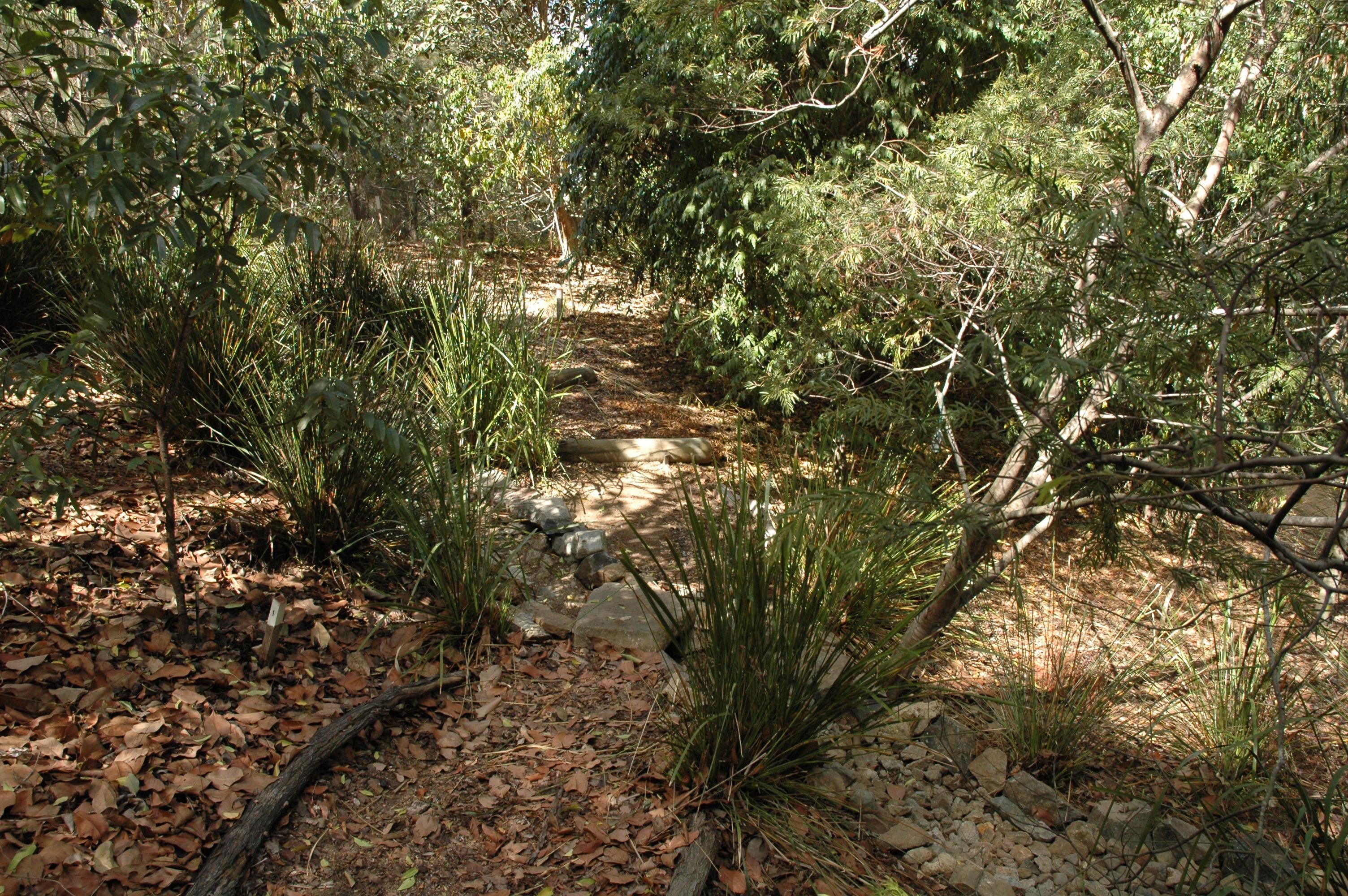 Your Garden | Grow Australian plants