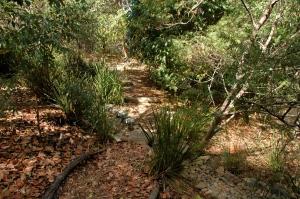 informal path